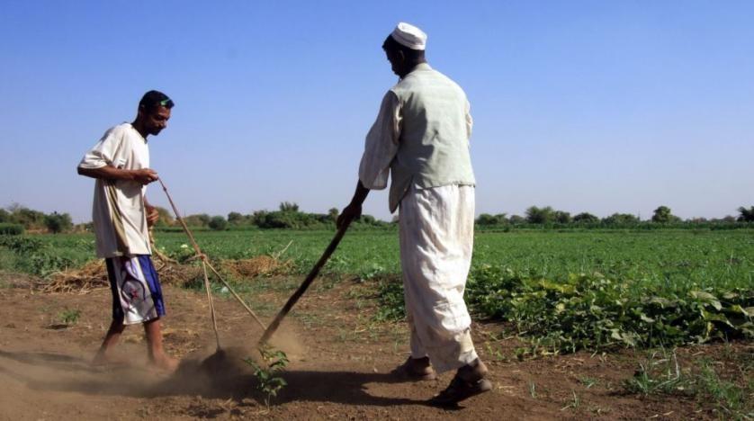 Allevatore Sudan